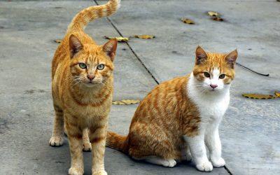 Lima Tanda Berikut Menunjukan Kucing Menyayangi Anda