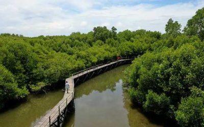 Ekowisata Mangrove Penajam, Destinasi Wisata Andalan di Calon Ibu Kota Baru RI